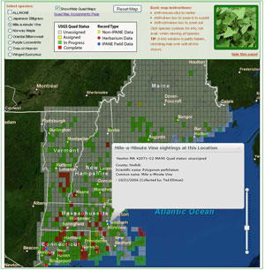 Screenshot of Mapping Tool of Invasive Species in New England